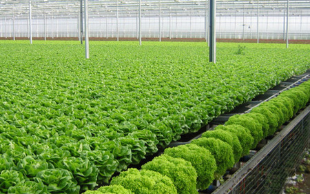 """Kiến nghị """"cởi trói"""" thị trường đất, vốn gỡ nút thắt cho nông nghiệp"""