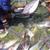Hãy để cá tra vào các siêu thị và kênh bán lẻ nội địa