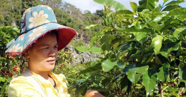 Sơn La thu trên 115 triệu USD từ xuất khẩu nông sản trong 10 tháng