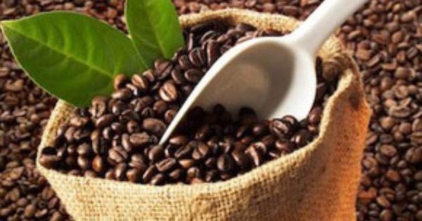 Giá cà phê trong nước tăng do mưa lớn kéo dài