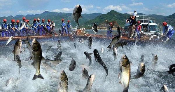 Thủy sản Nam Việt (ANV) đẩy mạnh xuất khẩu vào Trung Quốc, lãi sau thuế 9 tháng đạt 510 tỷ đồng