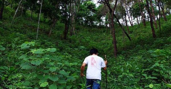 ''Bồ kết gội đầu, nước trầu súc miệng'' và chuyện CEO trẻ bỏ phố về rừng, kinh doanh sản phẩm làm đẹp không hóa chất, phụng dưỡng tự nhiên