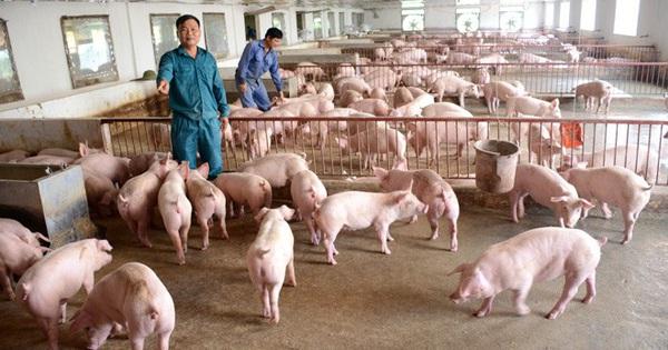 Chiến lược chăn nuôi đến năm 2030: Duy trì đàn lợn 29-30 triệu con