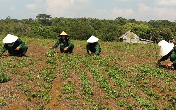 Quyết Định 3256/QĐ-UBND 21/12/2017 của Chủ tịch UBND tỉnh Sơn La Phê duyệt dự án Quy hoạch phát triển cây dược liệu trên địa bàn tỉnh sơn la đến năm 2020, định hướng đến năm 2030.