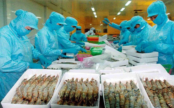 anti dumping case of vietnam catfish in us market Transcript of catfish dispute more than just a fish 2001-ban on the name catfish 2003-anti-dumping lawsuit results after the us and vietnam signed the.