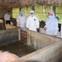 Dịch tả lợn châu Phi đã lan tới Thừa Thiên - Huế