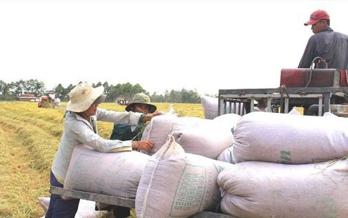 """Xuất khẩu gạo 10 tháng năm 2019 giảm 9,1% giá trị do """"rớt giá"""""""