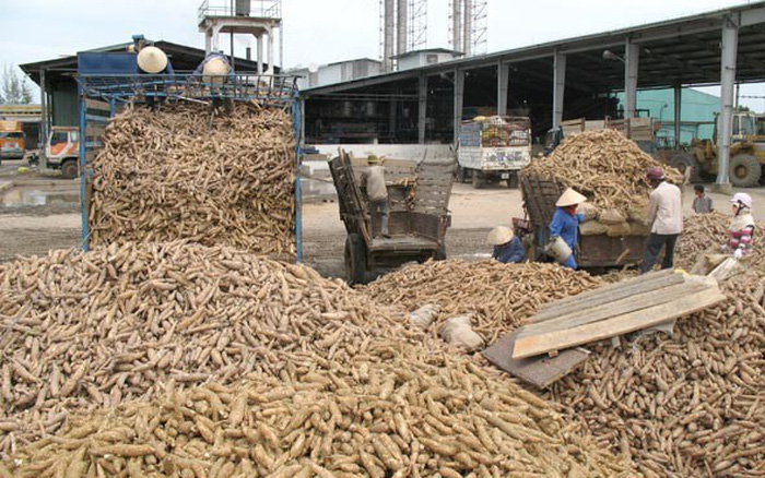Xuất khẩu sắn đối mặt cạnh tranh khốc liệt từ Thái Lan