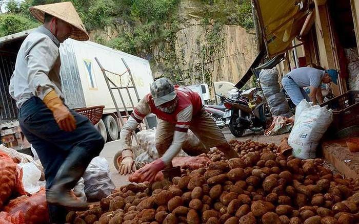 Bi hài chuyện giám định khoai tây ngoại nhập
