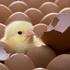 """Chuyện cuối tuần: Triết lý kinh doanh """"hãy chăm sóc những con gà mái"""" - và bí quyết """"khiến cho nhân viên cảm thấy hạnh phúc"""""""