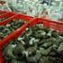 Nhiều mặt hàng xuất khẩu chủ chốt giảm trong tháng 11