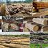 """Xuất khẩu gỗ """"sáng"""" nếu đảm bảo nguồn cung """"sạch"""""""