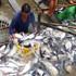 Việt Nam khiếu nại việc áp thuế cá tra của Hoa Kỳ
