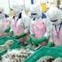 Thị trường EU dẫn đầu về nhập khẩu tôm của Việt Nam
