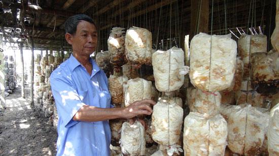Ông Phạm Văn Mỹ kiểm tra các bịch giống nấm.