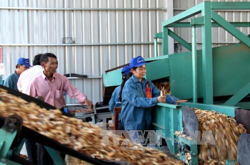 Công nhân đang làm việc tại dây chuyền sản xuất gỗ dăm từ gỗ nguyên liệu. Ảnh minh họa: Thế Lập/TTXVN.