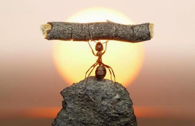 Người thành công không bao giờ tin vào giới hạn của bản thân.
