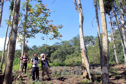 Ngày càng có nhiều người say mê tìm đến với rừng lá phong ven Hồ Tuyền Lâm.