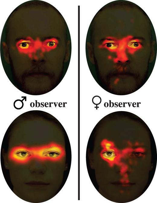 Nữ giới thường có xu hướng nhìn về phía bên trái của sự vật và họ cũng có cái nhìn tổng thể hơn so với nam giới.