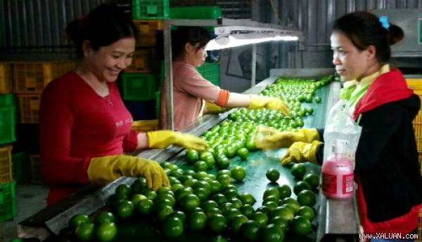 Bà Bùi Thị Ba, 56 tuổi, quê Bến Lức, Long An hiện sở hữu nông trại 30 ha chanh không hạt, mỗi ngày xuất 40 tấn đi Singapore, Thái Lan và các nước Trung Đông, thu lãi gần 3 tỷ đồng mỗi năm. (Theo VnExpress)