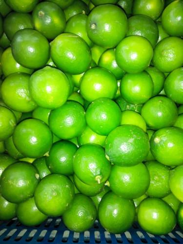 Các chuyên gia khuyến cao nên thu hoạch quả vào lúc trời mát, không nên thu quả sau cơn mưa hoặc nhiều sương mù, dễ bị hỏng khi bảo quản.