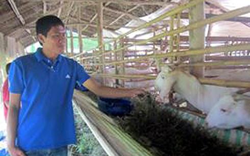 Phong trào nuôi dê ở tỉnh Tiền Giang đang phát triển mạnh.