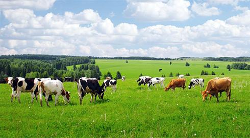 Những năm gần đây, số lượng DN đầu tư vào nông nghiệp gia tăng.(Ảnh minh họa: KT)