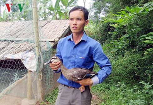 Phạm Văn Nhật mở trang trại nuôi vịt trời.