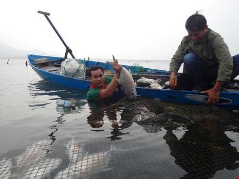 Anh Trần Văn Minh ngâm người dưới dòng nước lạnh buốt để vớt cá chết. Ảnh: NGUYỄN DO