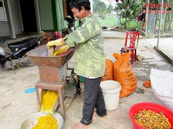 """Với nhiều hộ trồng nghệ nguyên liệu và sản xuất tinh bột nghệ, xã Nghi Kiều đang có chủ trương xây dựng làng nghề """"Sản xuất và chế biến tinh bột nghệ""""."""