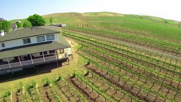 Ông Hoàng Kiều đã mua lại trang trại nho này từ gia đình Michael Mondavi – một gia đình nổi tiếng với nghề làm rượu nho tại Mỹ.
