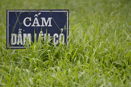 Thậm chí những biển cảnh báo cũng bị cỏ mọc che gần hết.