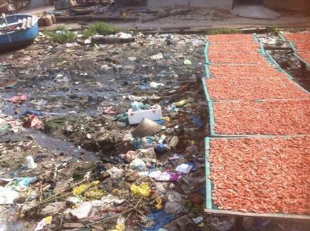 Tôm sau khi đã tẩm màu phơi trên bãi rác bốc mùi hôi thối