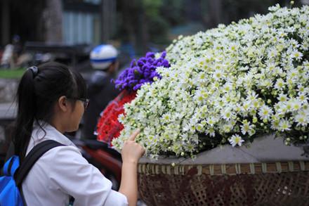 Dạo quanh phố phường Hà Nội như Phan Đình Phùng, Giảng Võ, Láng… trên nhiều con đường đồng loạt xuất hiện những gánh xe cúc họa mi trắng muốt thu hút ánh nhìn nhiều người qua đường.