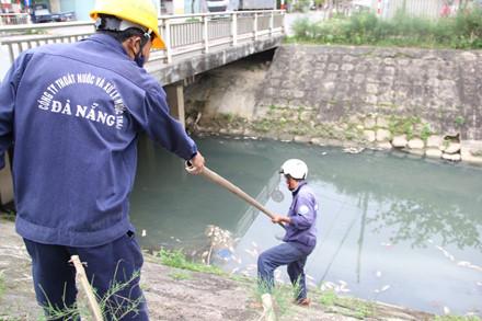 Các nhân viên của Công ty Thoát nước và xử lý nước thải TP.Đà Nẵng tiến hành vớt cá chết.