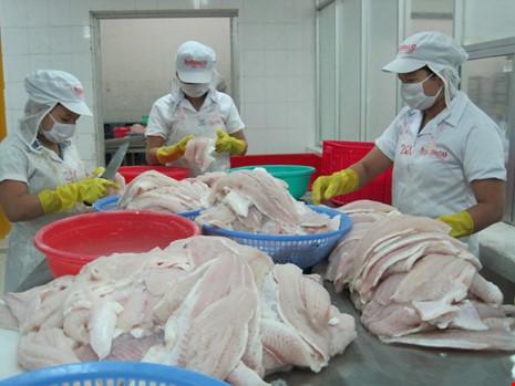 Chế biến cá tra xuất khẩu tại Tiền Giang