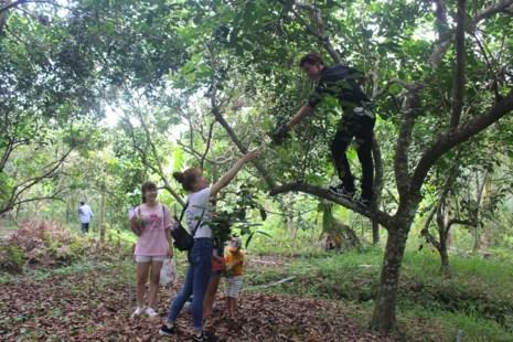 Do sản lượng trái cây khan hiếm nên nhiều vườn cây ăn trái không đáp ứng đủ nhu cầu tham quan- Ành: Đông Hà