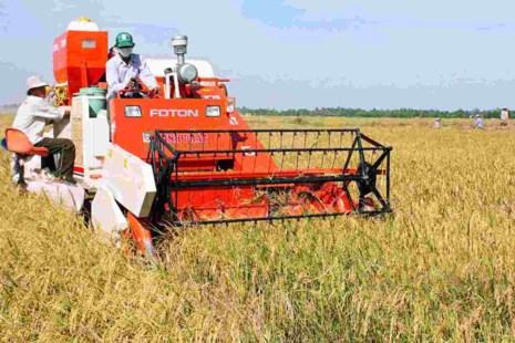 Tích tụ ruộng đất cần có chính sách pháp lý bảo đảm quyền lợi cho người nông dân.