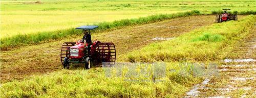 Đưa cơ giới thu hoạch lúa sản xuất theo mô hình cánh đồng mẫu lớn tại huyện Hồng Dân, Bạc Liêu. Ảnh: Huỳnh Sử/TTXVN