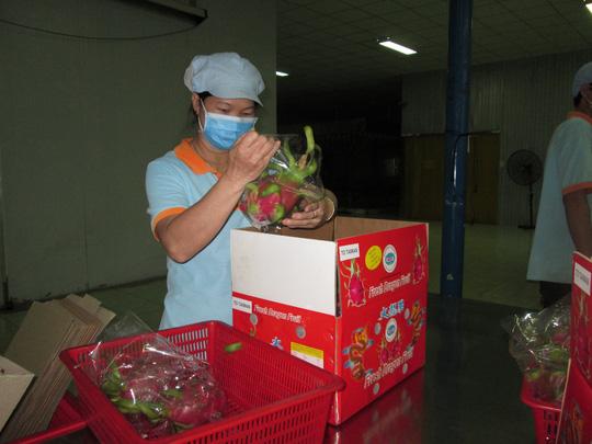 Đóng gói thanh long xuất khẩu đi Đài Loan