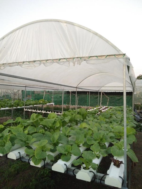 Mô hình sản xuất rau sạch theo phương pháp thủy canh của trang trại sản xuất rau rạch Cần Thơ Farm.