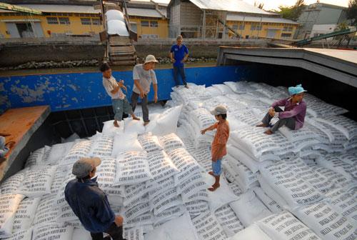 Doanh nghiệp sẽ được tự chủ hơn trong xuất khẩu gạo Ảnh: Ngọc Trinh