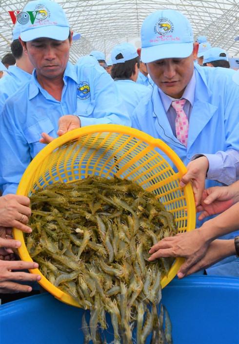 Hiện Việt Nam đã ứng dụng nhiều công nghệ cao trong phát triển nuôi tôm.