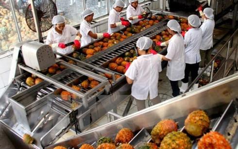 Giá trị xuất khẩu hàng rau quả tháng 10/2017 ước đạt 209 triệu USD.(Ảnh minh họa: Internet)