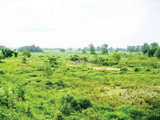 Dự án Khu thành phố Đại học Berjaya Tây Bắc Củ Chi bị thu hồi chủ trương đầu tư do chậm thực hiện nhưng TP đang vướng xử lý.Ảnh: TR. Giang