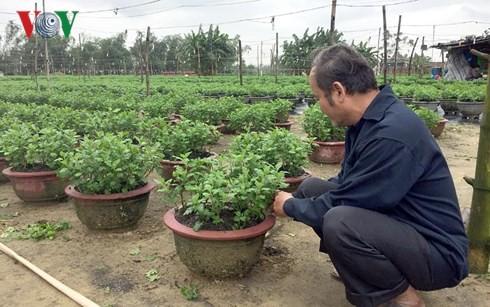 Nhờ nghề trồng hoa cúc, gia đình ông Lý Phước A có đời sống khấm khá.