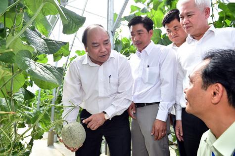 Thủ tướng đánh giá cao mô hình trồng dưa lưới áp dụng công nghệ cao. Ảnh: VGP/Quang Hiếu