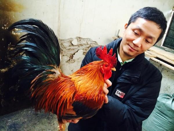 Mong muốn bảo tồn được giống gà quý của Việt Nam nên anh Hòa hưởng ứng bỏ chức giám đốc về nuôi gà.