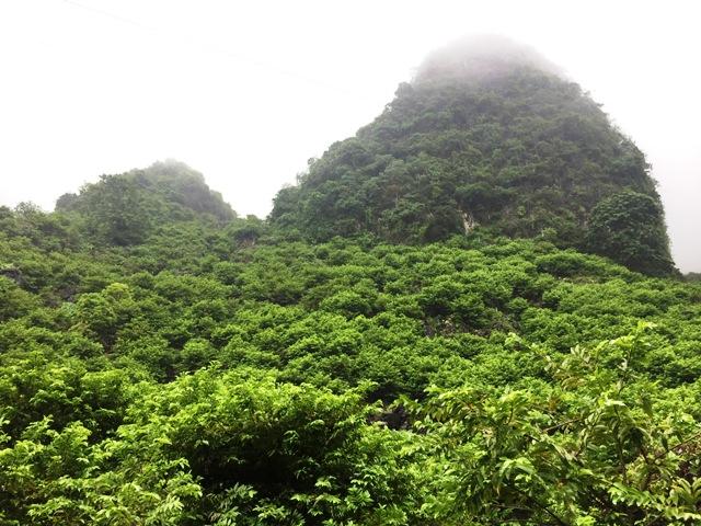 Người dân xã Quang Lang trồng na trên núi đá.