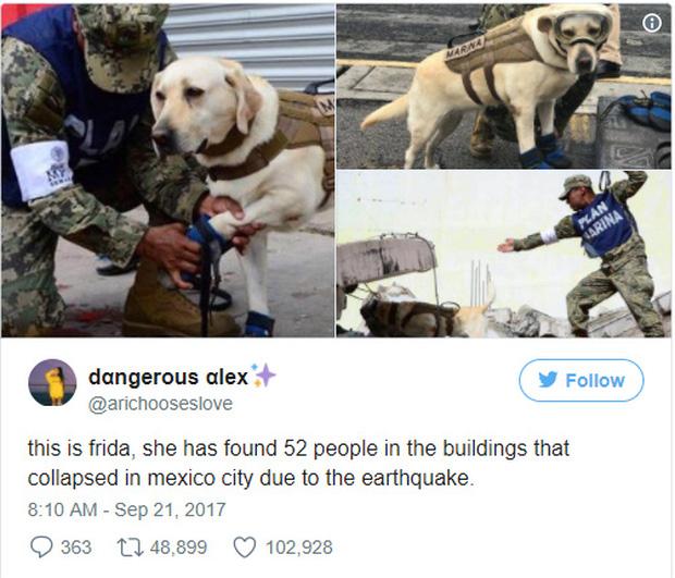 Bài đăng trên trang Twitter của tổng thống Enrique Pena Nieto với nội dung ngợi khen thành tích của cô chó Frida.